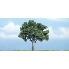 3 7/8 Premium Walnut Tree (1)