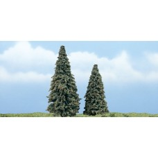 Premium Conifer Trees (2)