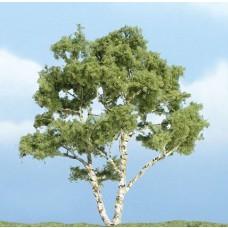 4 Premium Birch Tree (1)