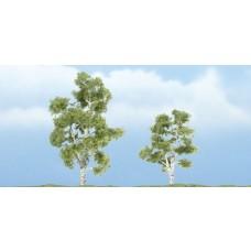 Premium Sycamore Trees (2)