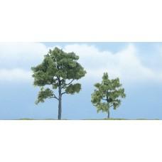 Premium Locust Trees (2)