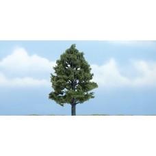 4 Premium Sweetgum Tree (1)