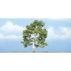 4 Premium Sycamore Tree (1)