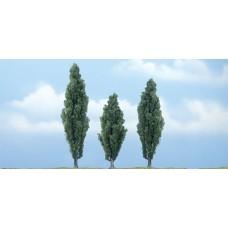 Premium Poplar Trees (3)