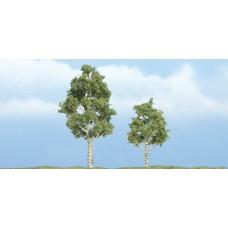 Premium Aspen Trees (2)