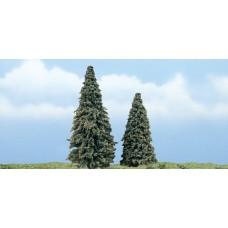 Premium Conifer Trees (2)